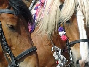 Pferde beim Ringreiten auf Zeeland