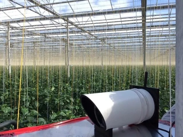 EyesOnHives can be used to quantify and monitor the flight activity of bumblebees, essential pollinators for many varieties of crops in greenhouses.  Image courtesy Biobest and Suntastic.