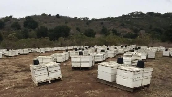Commercial Overwintering Hives
