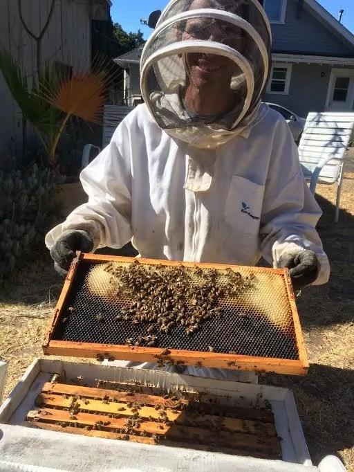 Bee Zen in the EyesOnHives apiary