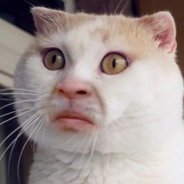 惡搞表情 阿了個貓