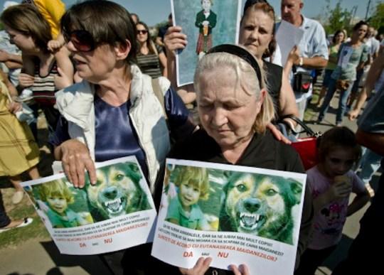 Romania Stray Dogs Protest
