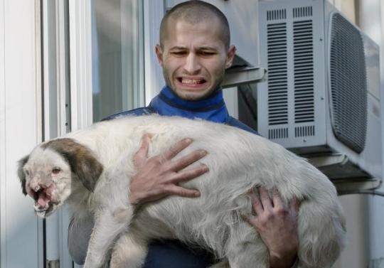 獸醫抱著臉部遭到嚴重傷害的流浪狗。翻攝自《紐約每日新聞》