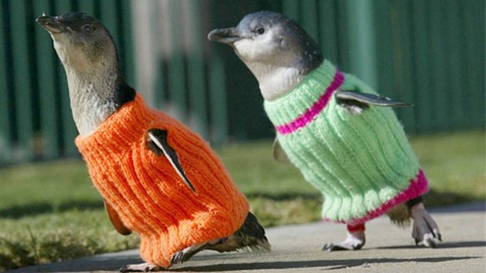 adaymag-knit-a-sweater-save-a-penguin-06