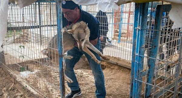 Über 40 Zootiere gerettet