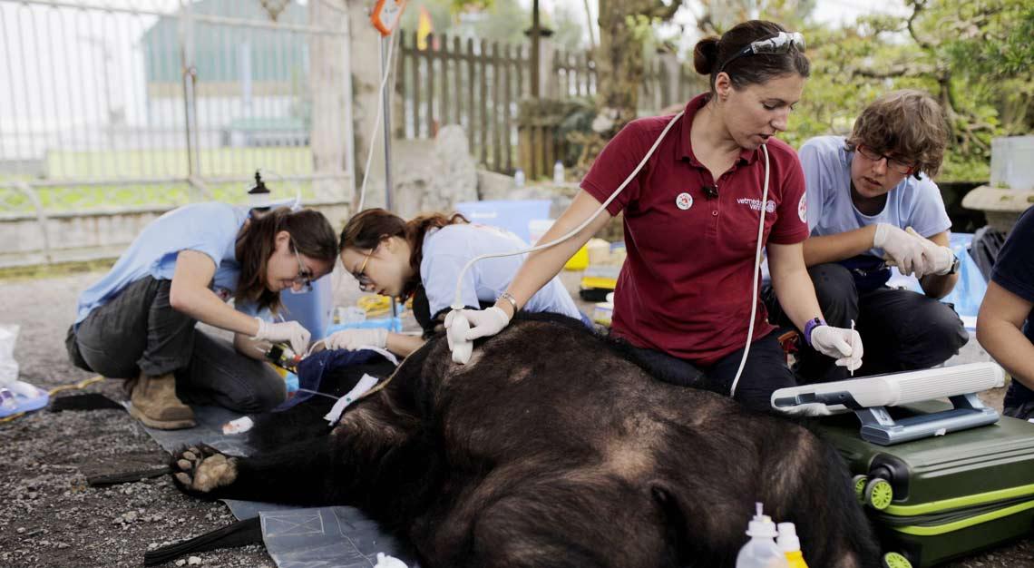 Tierärztin Dr. Johanna Painer untersuchte die Bären vor Ort.