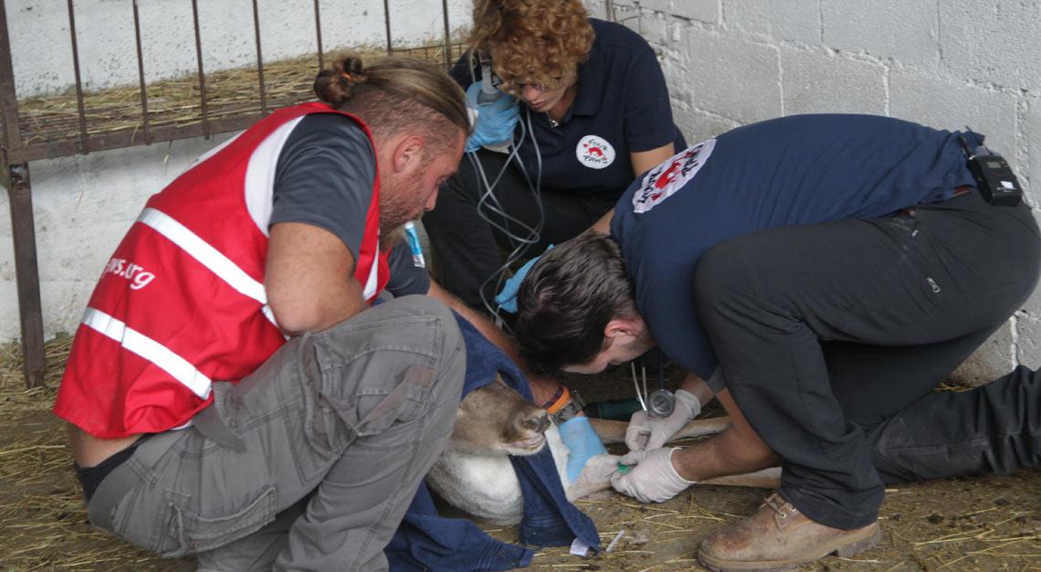 Das Tierärzte-Team von VIER PFOTEN untersucht die Tiere vor dem Transport.