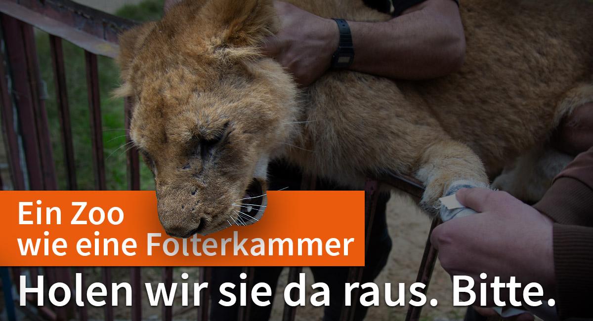 Helfen Sie, die Zootiere von Rafah zu retten!