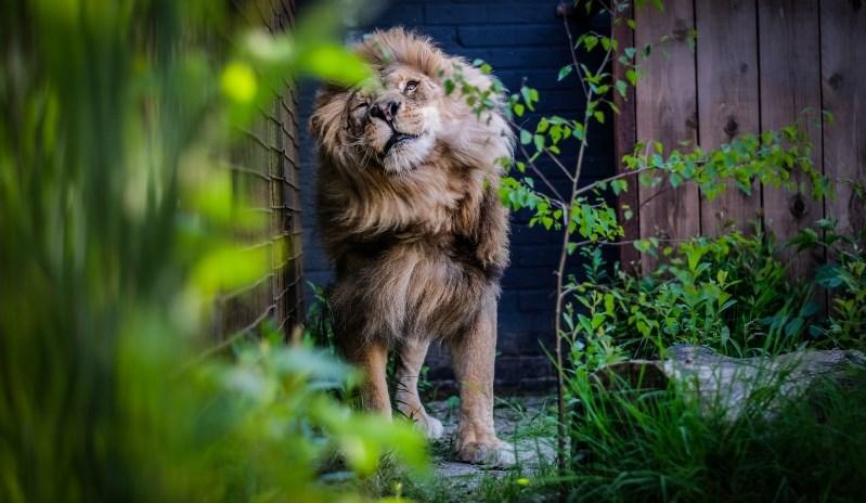 Am Ziel: Bobby macht die ersten Schritte in der Großkatzenstation FELIDA.