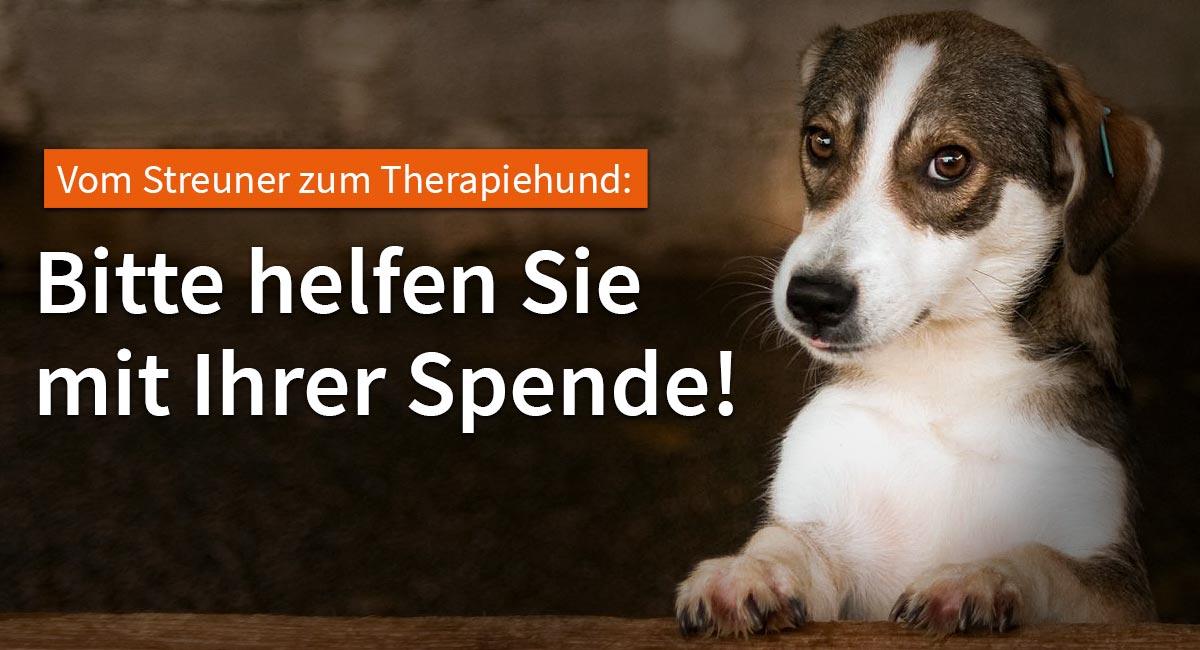 VIER PFOTEN bildet ehemalige Streuner zu Therapiehunden aus.