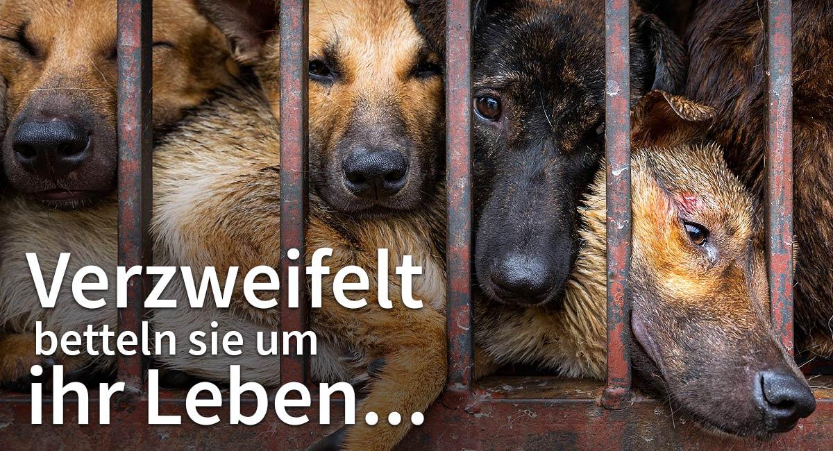 Helfen Sie Hunden in Südostasien!