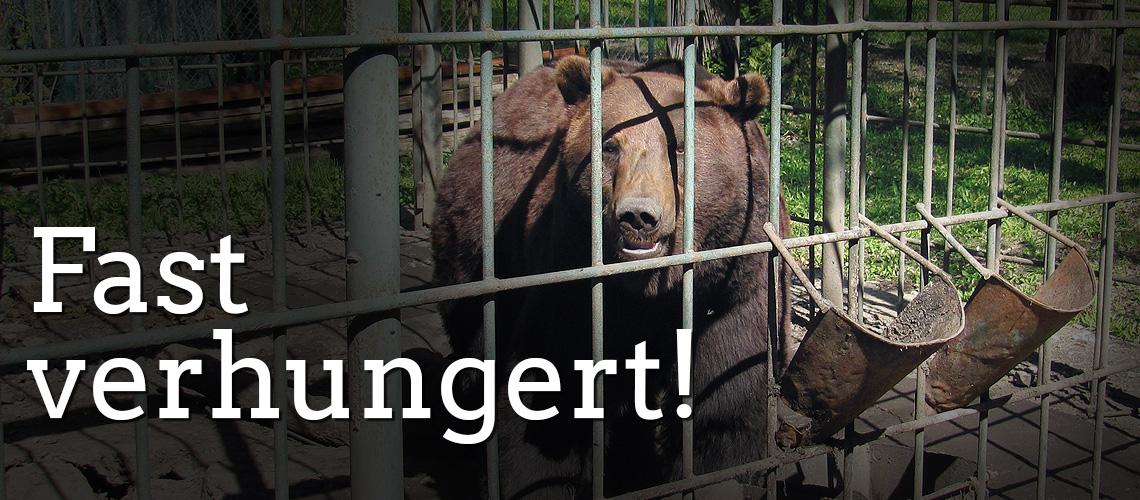 Fast verhungert!