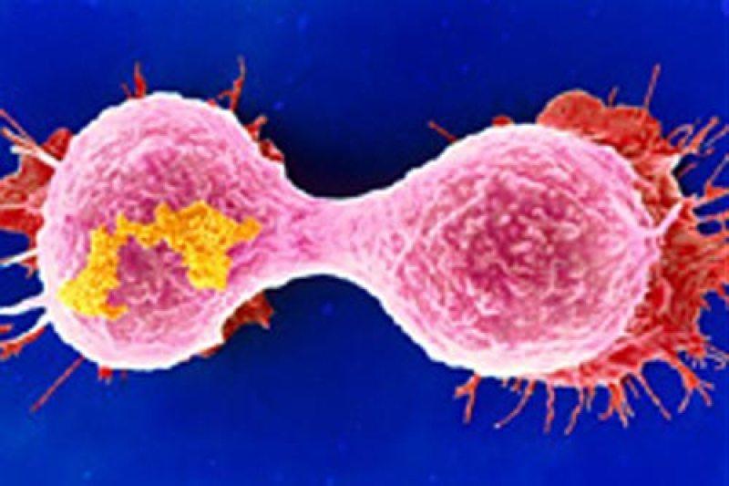 enzima_cancer