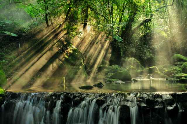 scenic view of rainforest Aysa