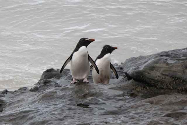 cold sea bird beach Malvinas