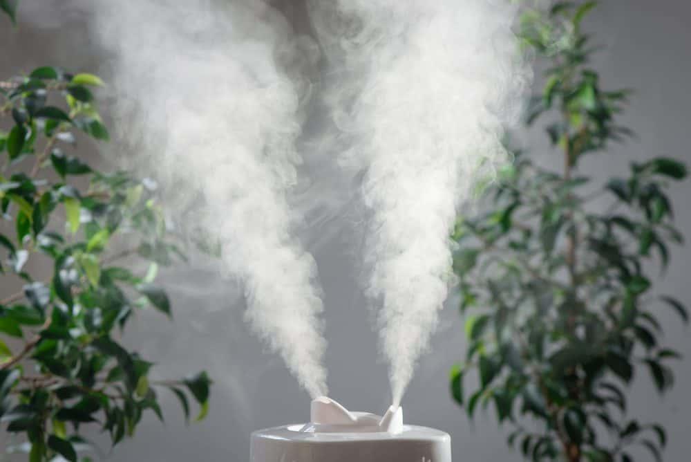 aumentar umidade de casa-infoclima