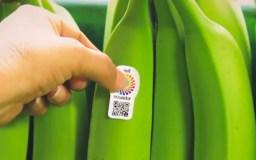 Añaden códigos QR al plátano para fomentar turismo en Ecuador