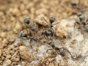 esperimento formiche robot cibo