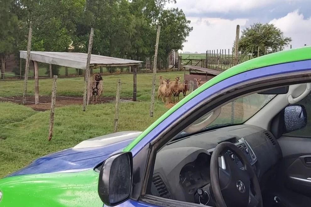Policía Ambiental encontró más de 60 animales exóticos en Bell Ville