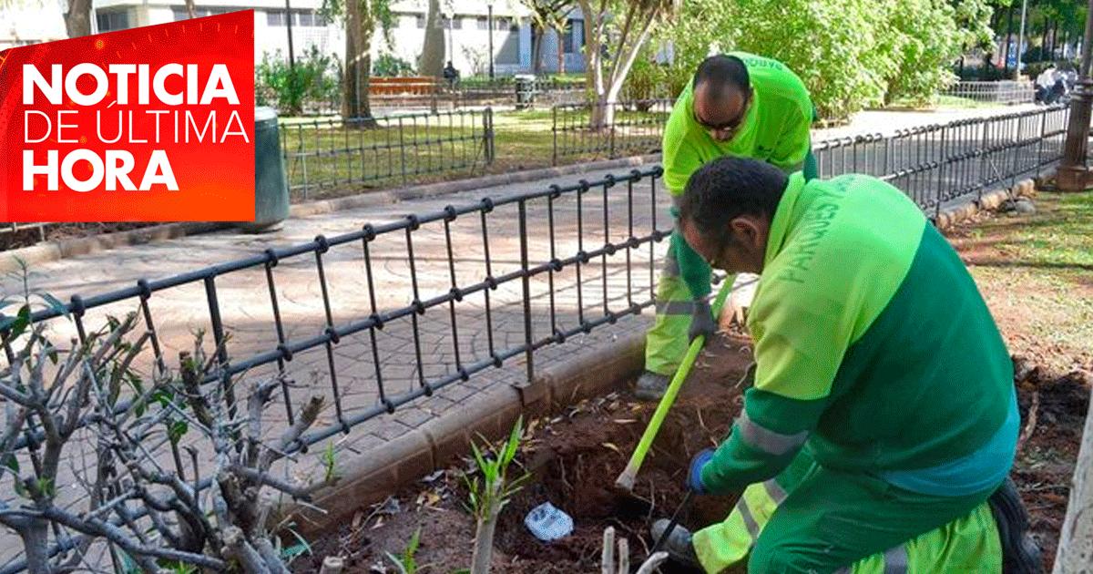338 nuevos empleados para el mantenimiento de zonas verdes en Sevilla.