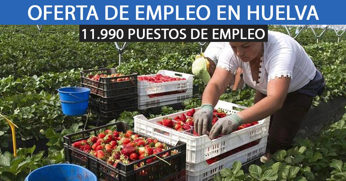 Se ofrecen 11.990 plazas de empleo para la recogida de Fresa en Huelva.