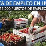 recogida de Fresa en Huelva