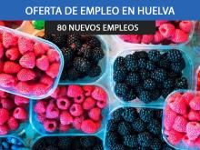 campaña de cítricos y frutos rojos en Huelva