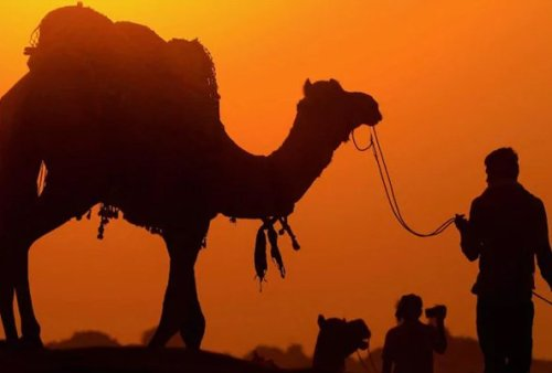 Man stole camel to gift his girlfriend