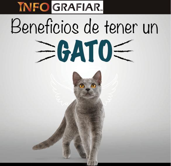 Beneficios de tener un gato