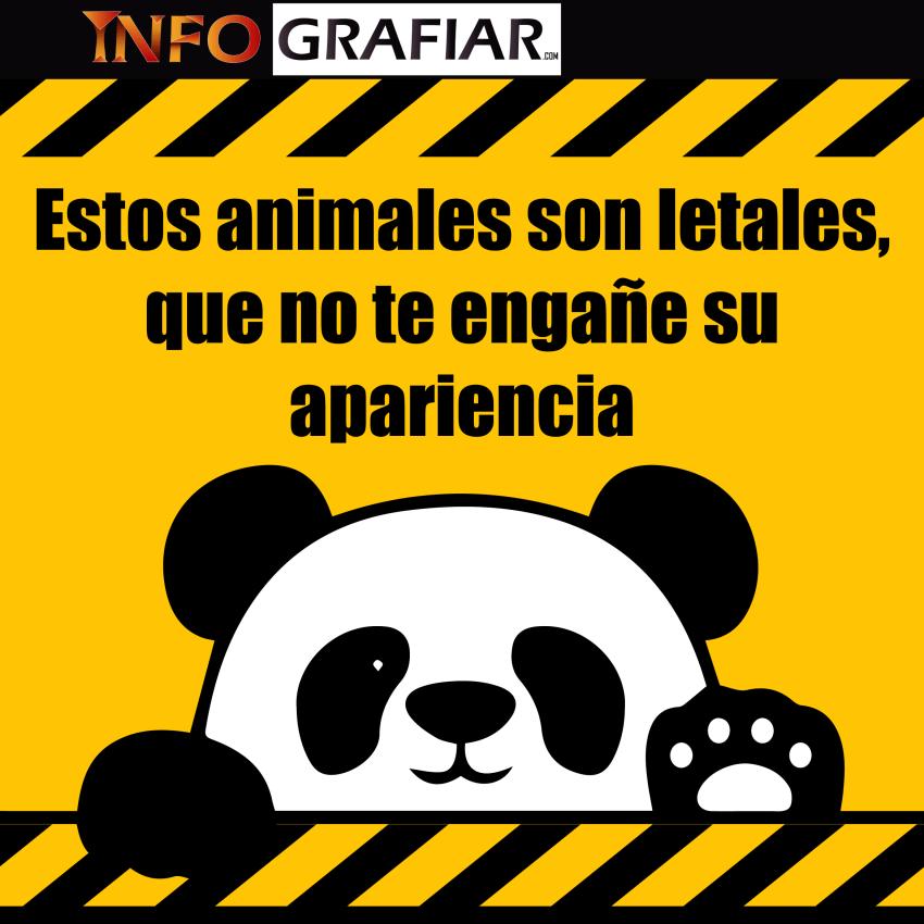 Estos animales son letales, que no te engañe su apariencia