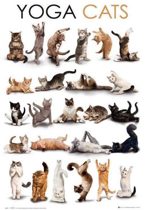 Cute Cats Doing Yoga