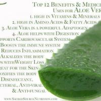 Infographic: Medicinal Uses for Aloe Vera