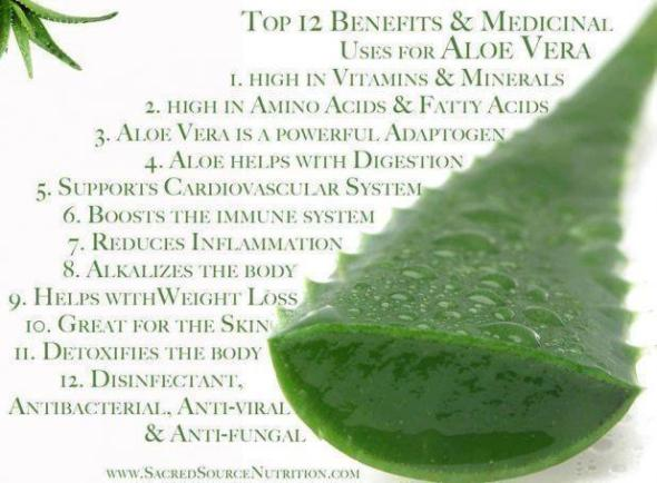 Benefits Of Drinking Aloe Concentrate