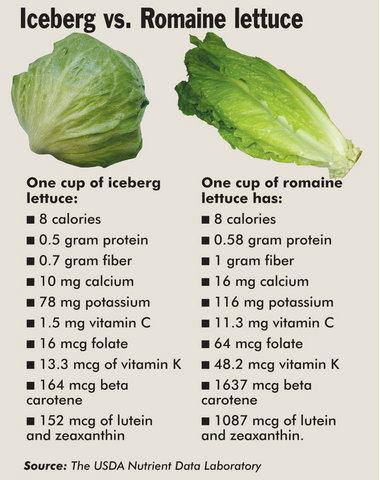 iceberg vs romaine lettuce