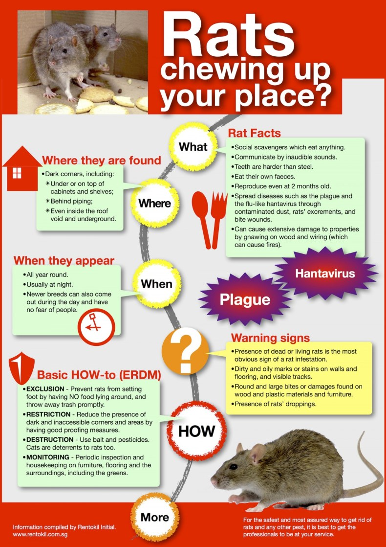 rats-chewing-up-your-place
