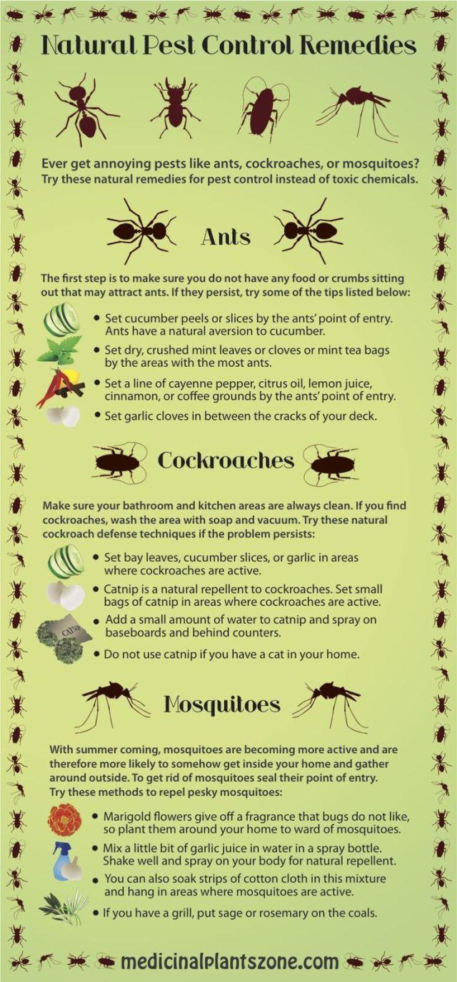 pest-control-remmedies