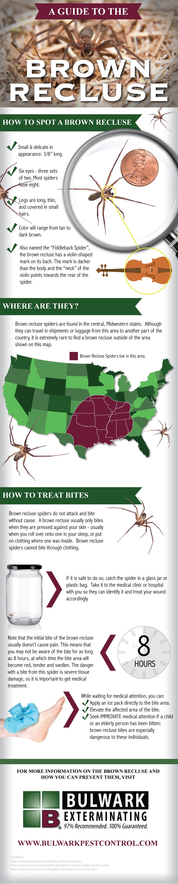 a-guide-to-the-brown-recluse-guide_5257cdd8469c2
