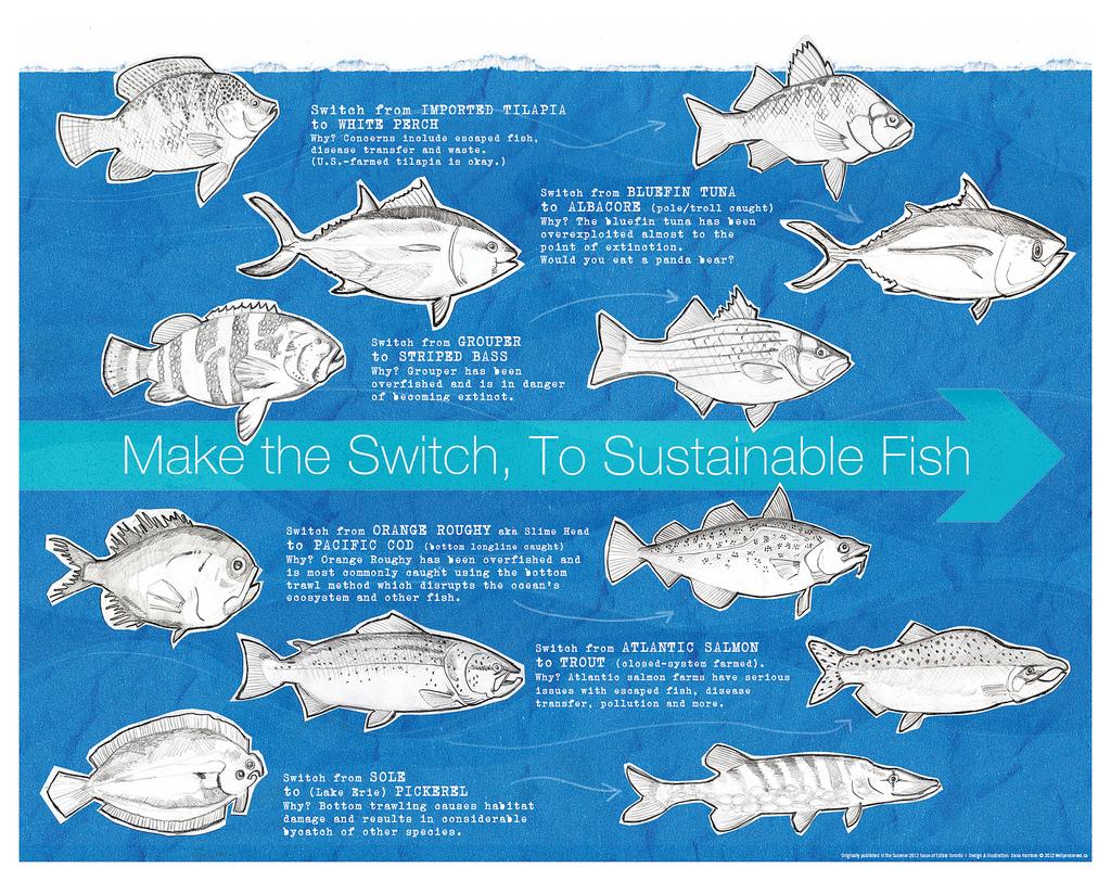 Fish Friday Sustainable Fish