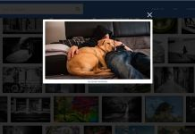 Get Flickr Photos for Blog Posts