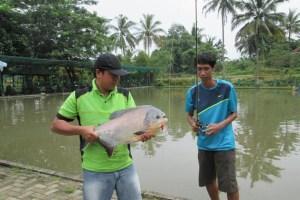 Monsterfish-di-Tempat-Pemancingan-Lubana-Sengkol-Serpong