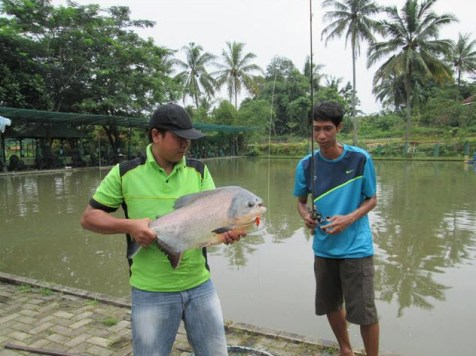 pemancingan-monster-fish-lubana-sengkol