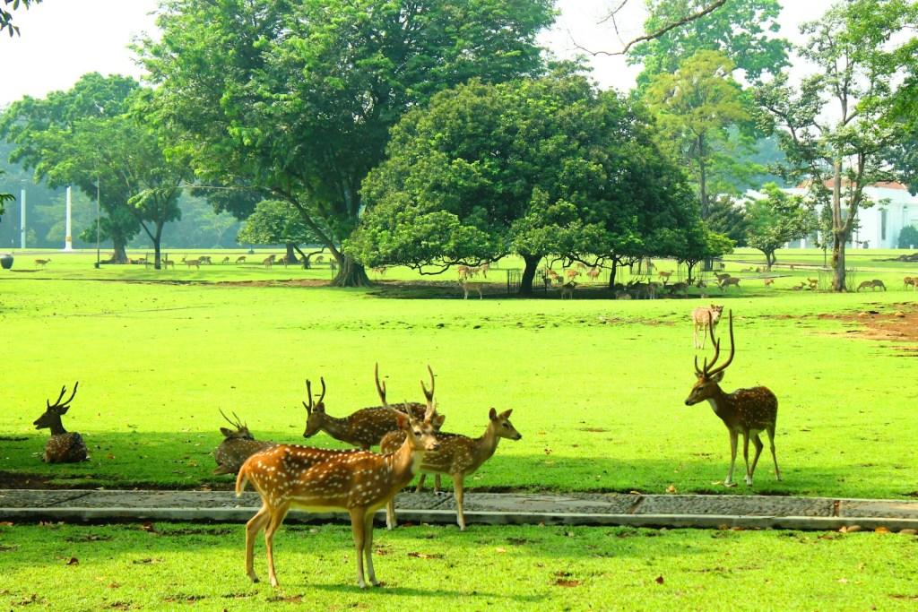 Kebun-Raya-Bogor-tempat-wisata-menarik-di-bogor