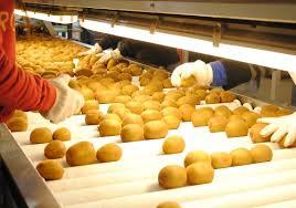Por primera vez, la Argentina exporta kiwi amarillo orgánico a Europa