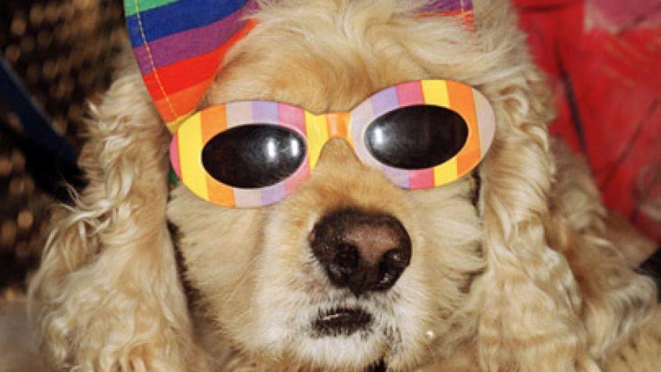 martin-parr-a-dog-with-sun1-1500x844