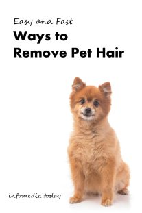 Easy and Fast Ways to Remove Pet Hair