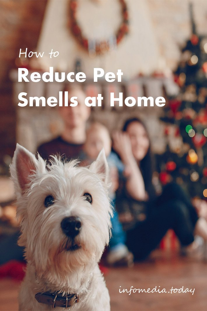 How to Reduce Pet Smells at Home