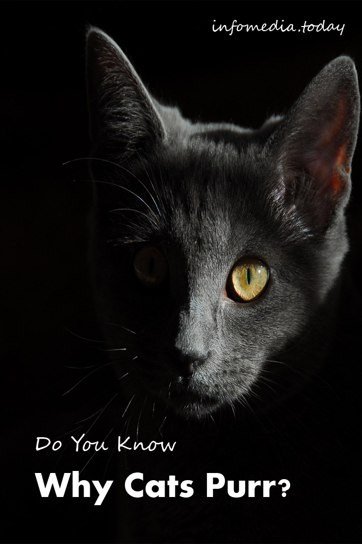 Do You Know Why Cats Purr ?