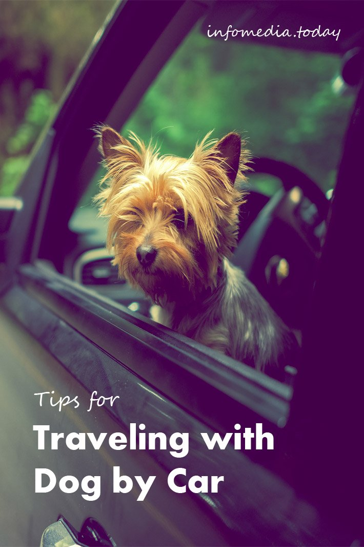 Tips for Traveling with Dog by Car