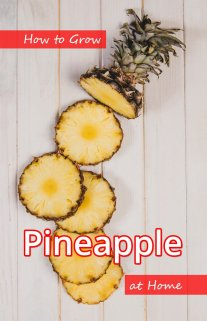 How to Grow Pineapple at Home