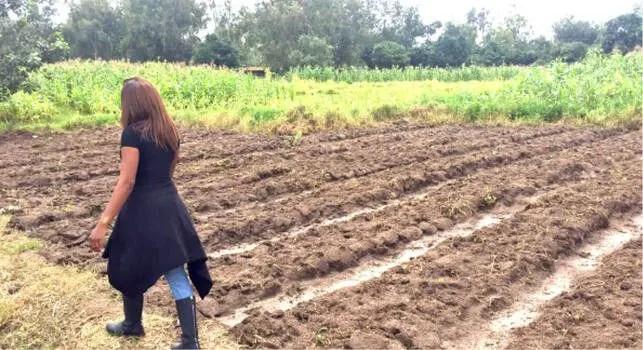 Meet Ashley Jiritmwa Tapgun Who Left UK To Start Strawberry Farming In Nigeria